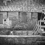 CharmedWall-Fotografie-Standesamt